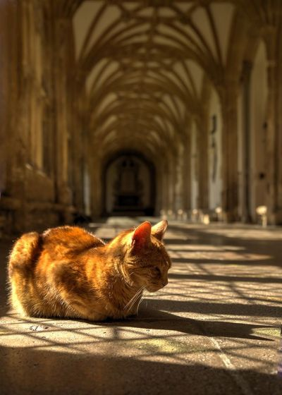 Cats in Places of Worship: They Still Don't Care #14 | Brain Berries