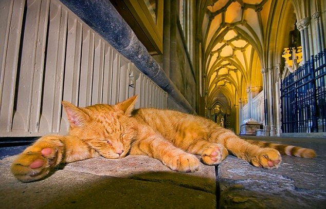 Cats in Places of Worship: They Still Don't Care #15 | Brain Berries