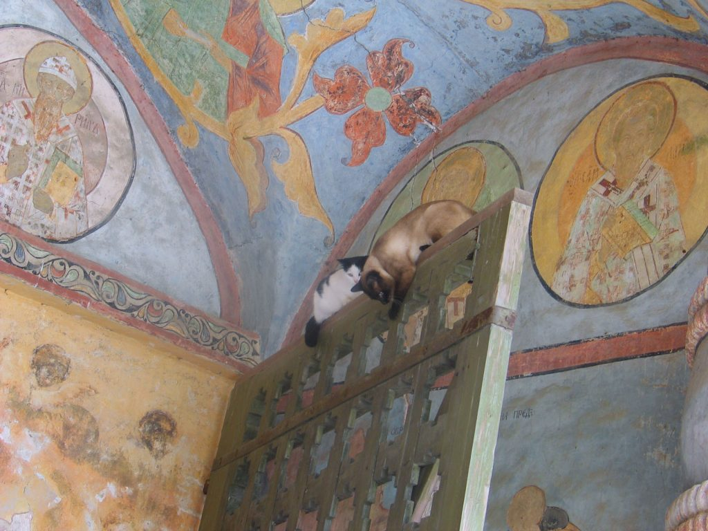 Cats in Places of Worship: They Still Don't Care #16 | Brain Berries