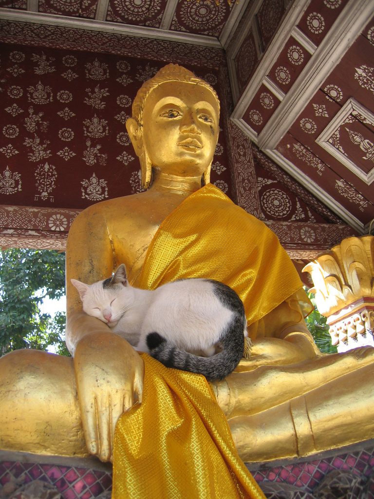 Cats in Places of Worship: They Still Don't Care #19 | Brain Berries