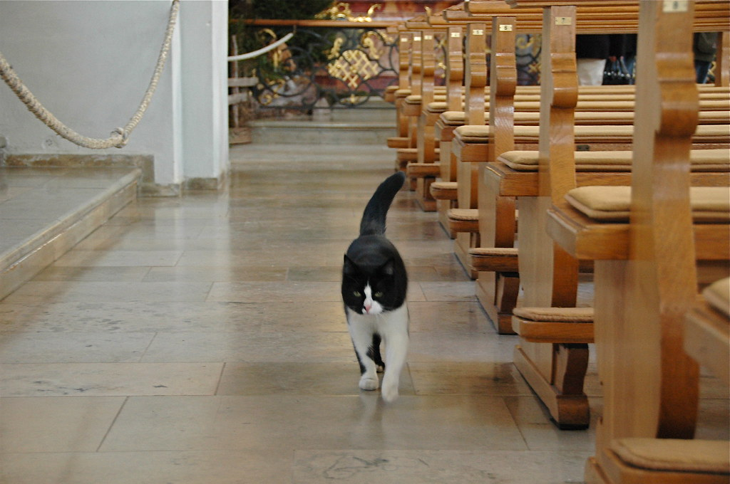 Cats in Places of Worship: They Still Don't Care #20 | Brain Berries