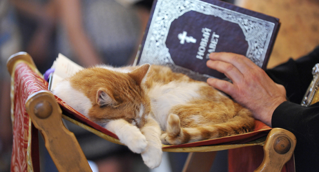Cats in Places of Worship: They Still Don't Care #3 | Brain Berries