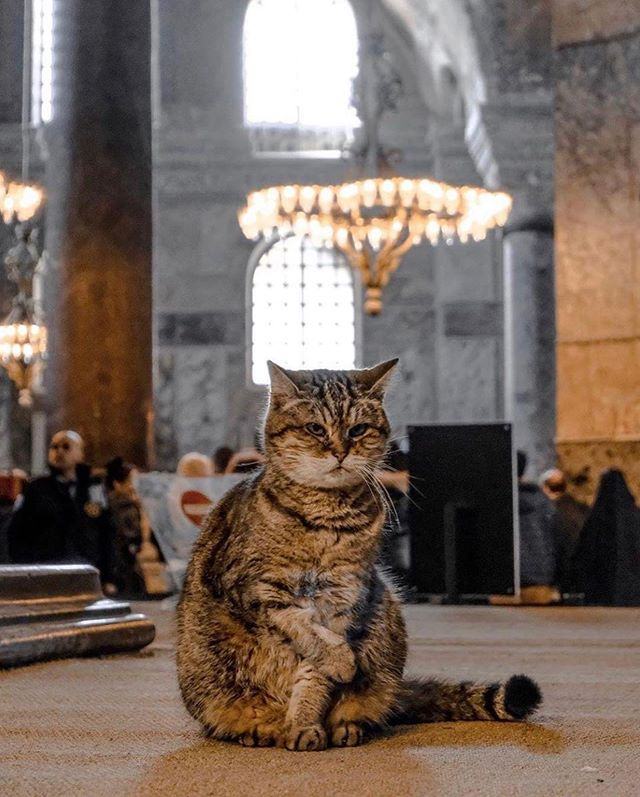 Cats in Places of Worship: They Still Don't Care #4 | Brain Berries
