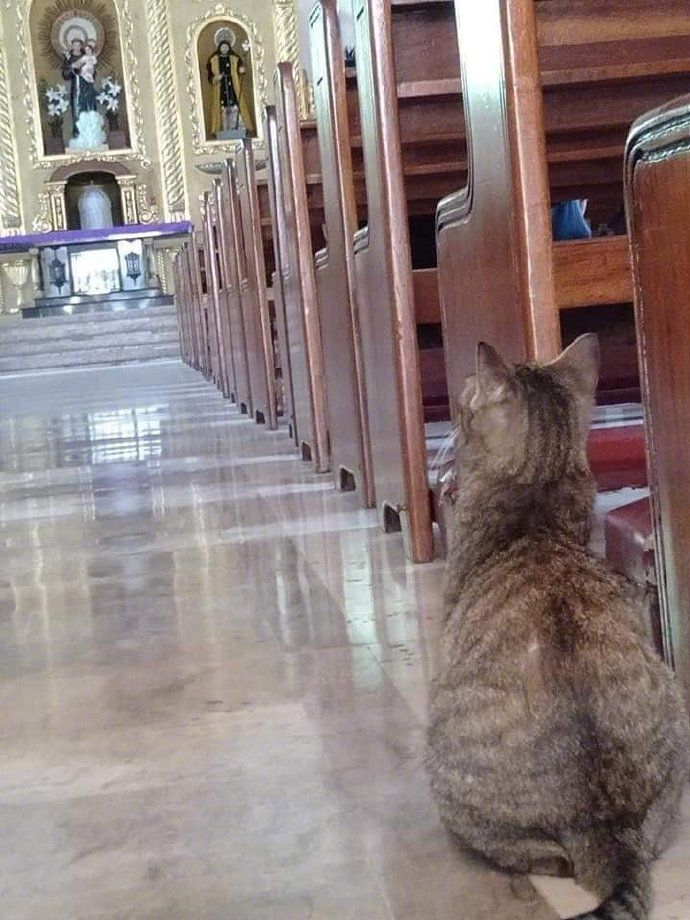 Cats in Places of Worship: They Still Don't Care #5 | Brain Berries