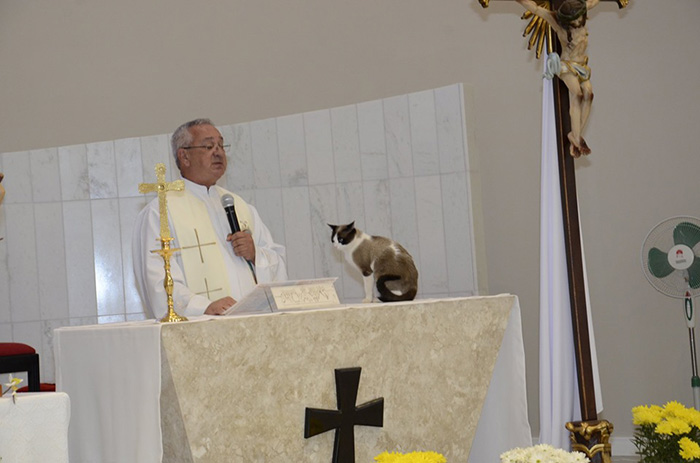 Cats in Places of Worship: They Still Don't Care #6 | Brain Berries