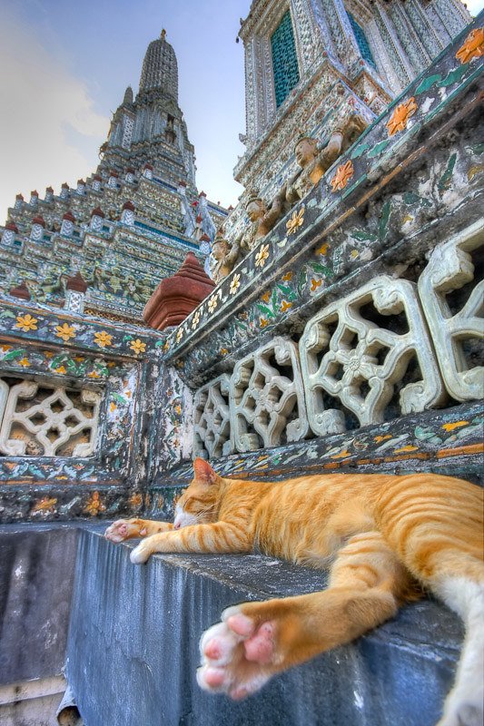 Cats in Places of Worship: They Still Don't Care #7 | Brain Berries