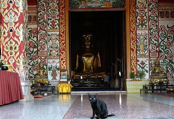 Cats in Places of Worship: They Still Don't Care #8 | Brain Berries
