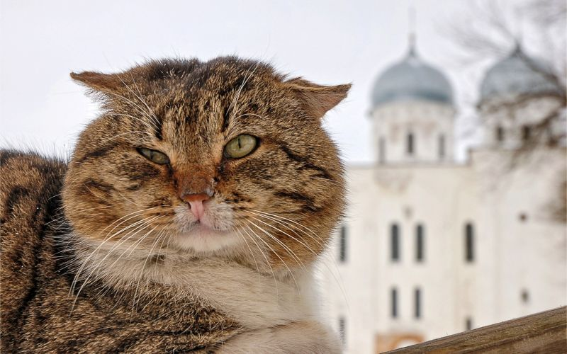 Cats in Places of Worship: They Still Don't Care #9 | Brain Berries
