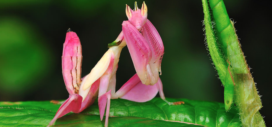 Pink Animals You Probably Haven't Seen Before | Zestradar