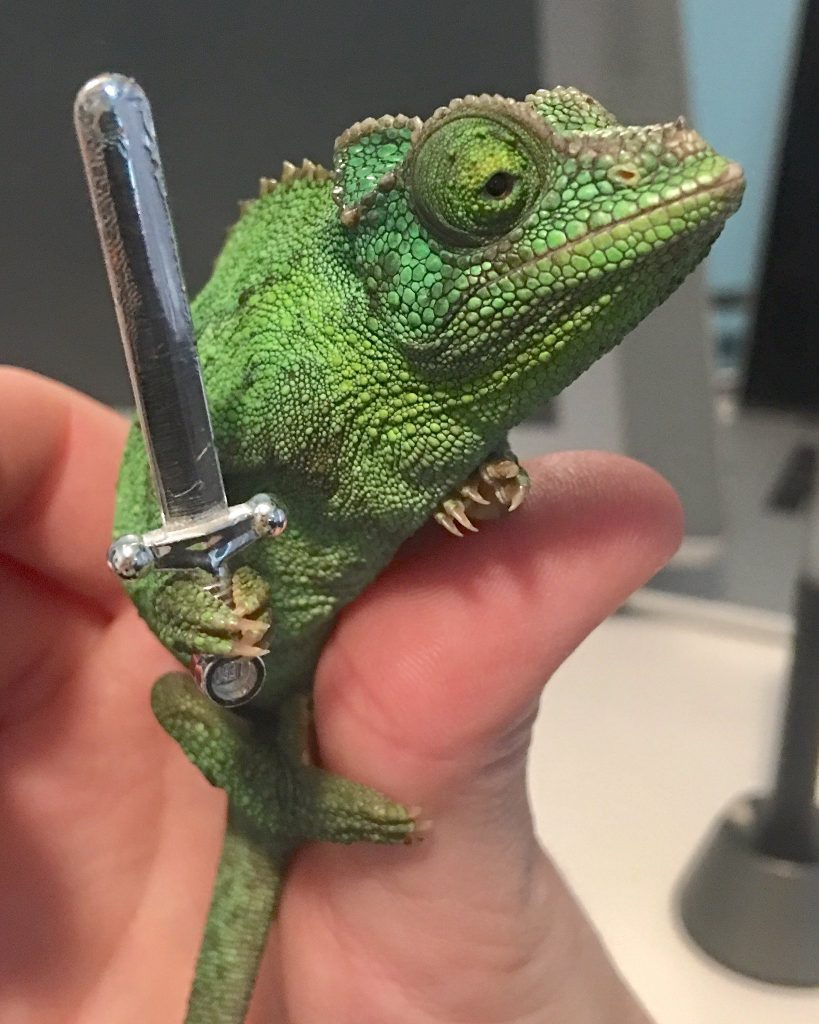 Chameleons Holding Tiny Weapons Is The Best Thing To Come Out Of 2020 | Brain Berries