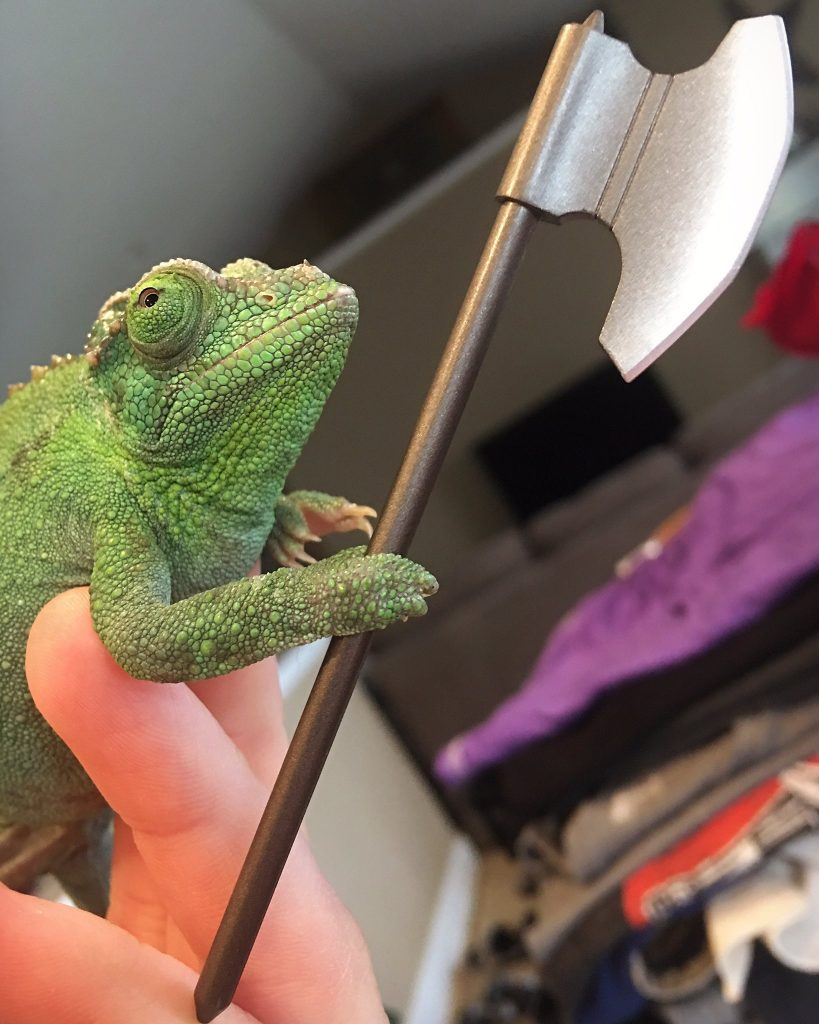 Chameleons Holding Tiny Weapons Is The Best Thing To Come Out Of 2020 #2 | Brain Berries