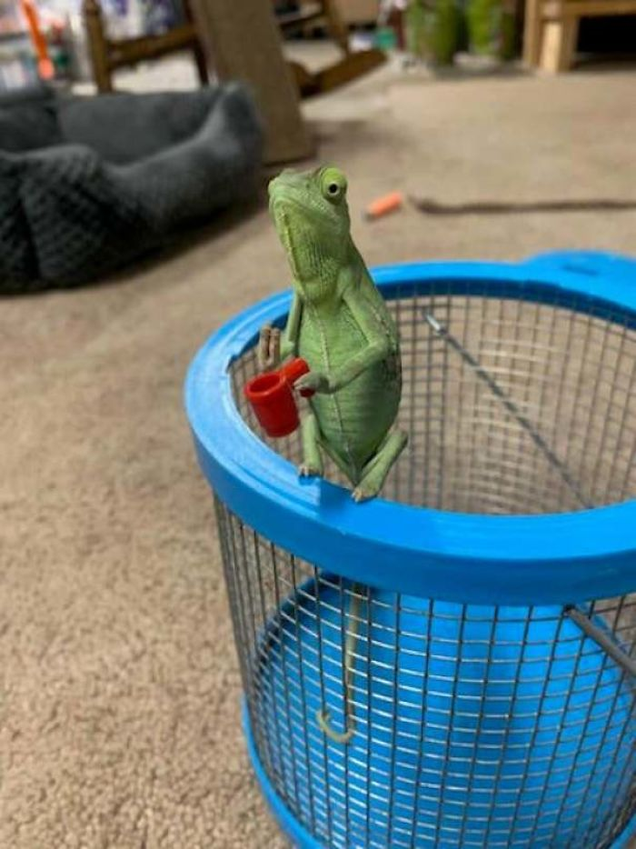Chameleons Holding Tiny Weapons Is The Best Thing To Come Out Of 2020 #5 | Brain Berries