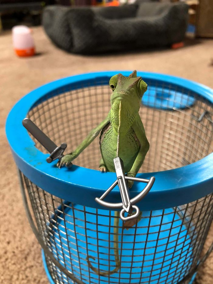 Chameleons Holding Tiny Weapons Is The Best Thing To Come Out Of 2020 #6 | Brain Berries