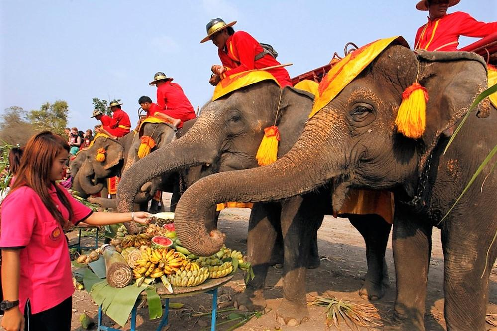 Elephant (Thailand) | 7 Sacred Animals from Around the World | Zestradar