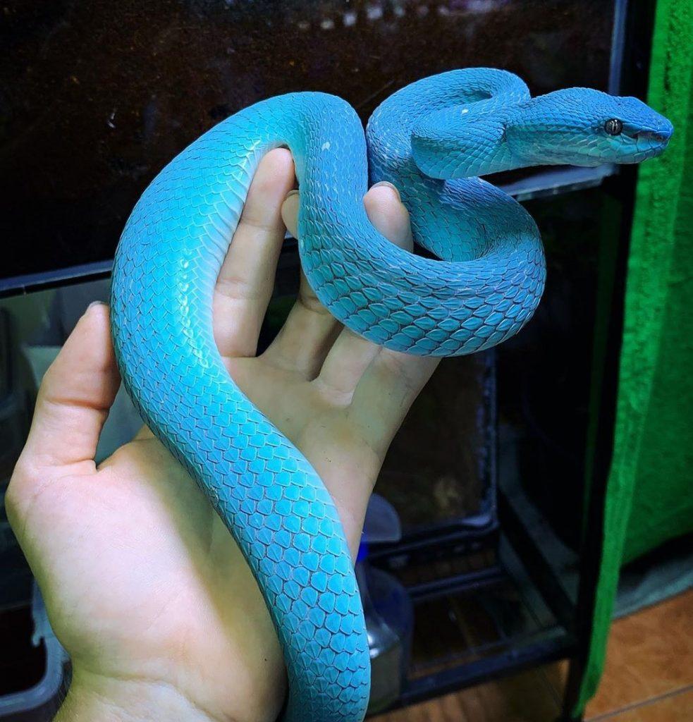 Neon Blue Snake | 15 Weird-Looking Animals That Belong in a Sci-Fi Movie | Zestradar