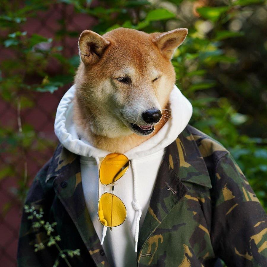 #3   Сиба-ину Бодхи: cамый стильный пес в мире   Zestradar