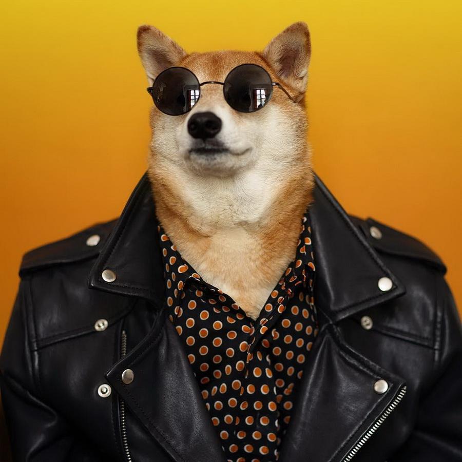 #4   Сиба-ину Бодхи: cамый стильный пес в мире   Zestradar