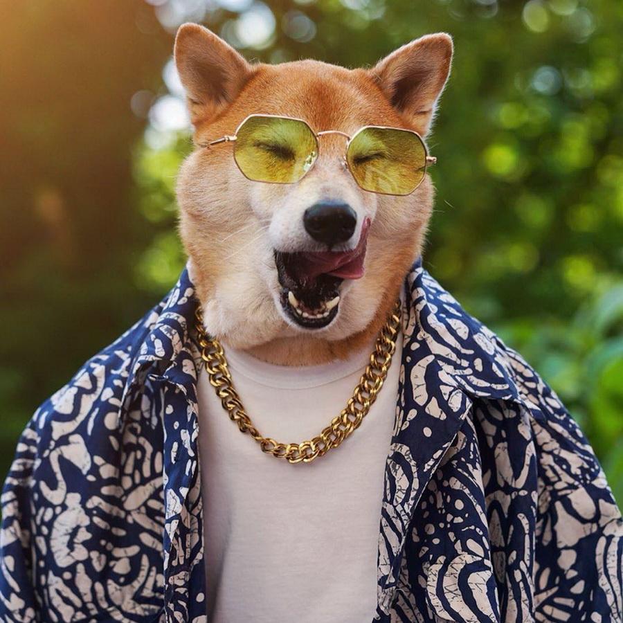 #5   Сиба-ину Бодхи: cамый стильный пес в мире   Zestradar