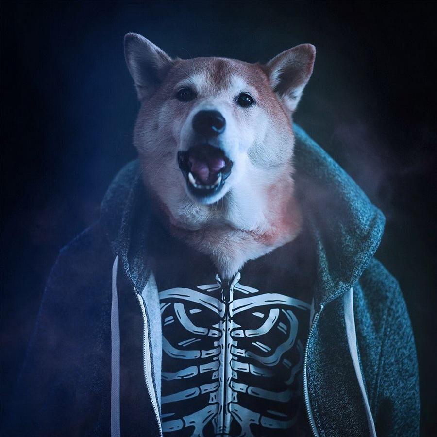 #7   Сиба-ину Бодхи: cамый стильный пес в мире   Zestradar