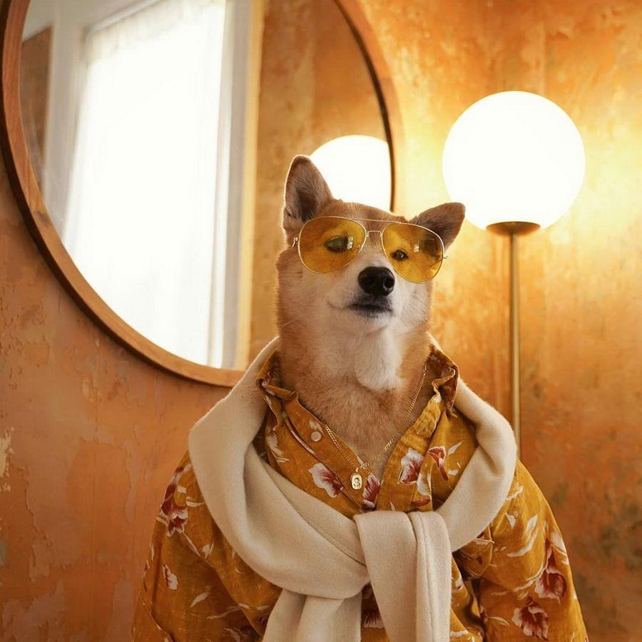 #14   Сиба-ину Бодхи: cамый стильный пес в мире   Zestradar