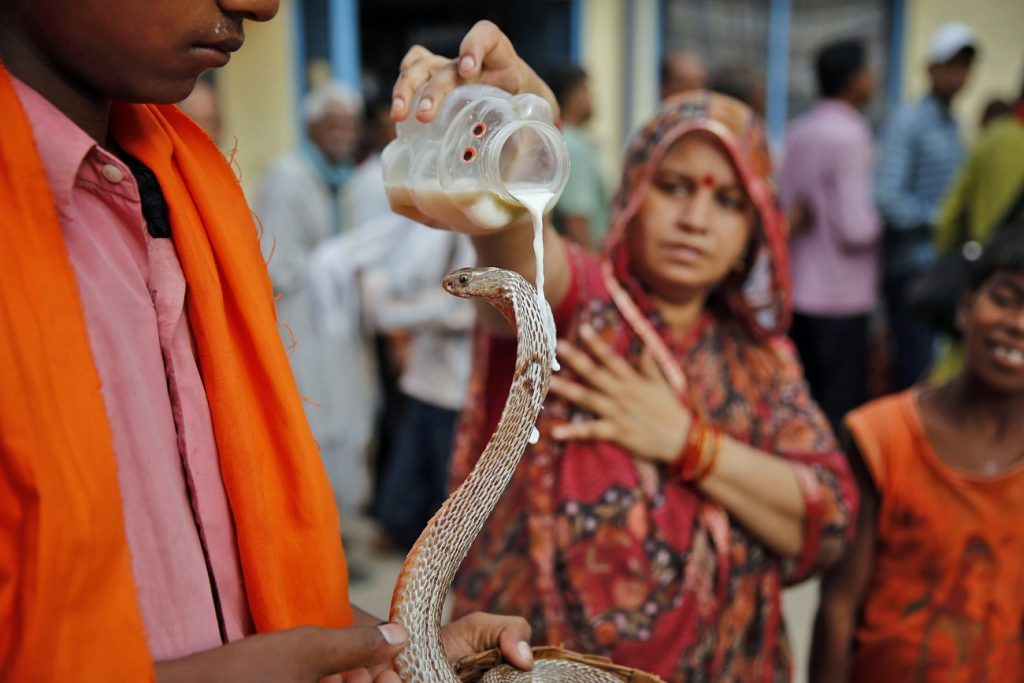 Snake (India) | 7 Sacred Animals from Around the World | Zestradar