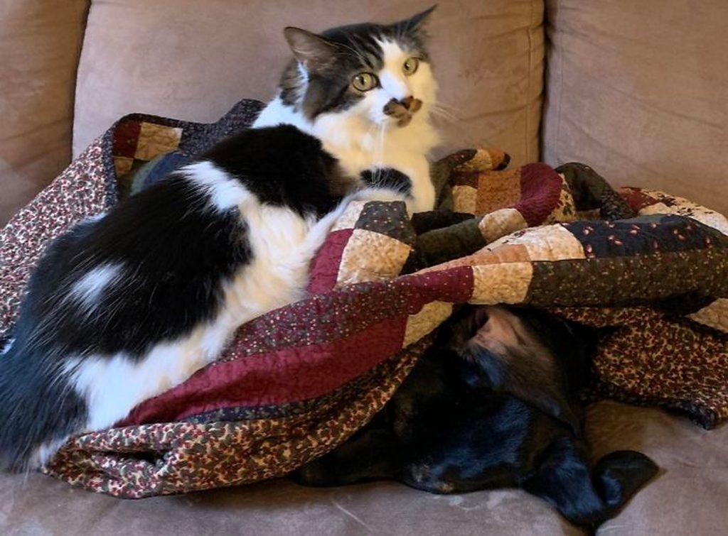 #1 | 12 фотографий, доказывающих, что коты — суперзлодеи в мире домашних животных | Zestradar