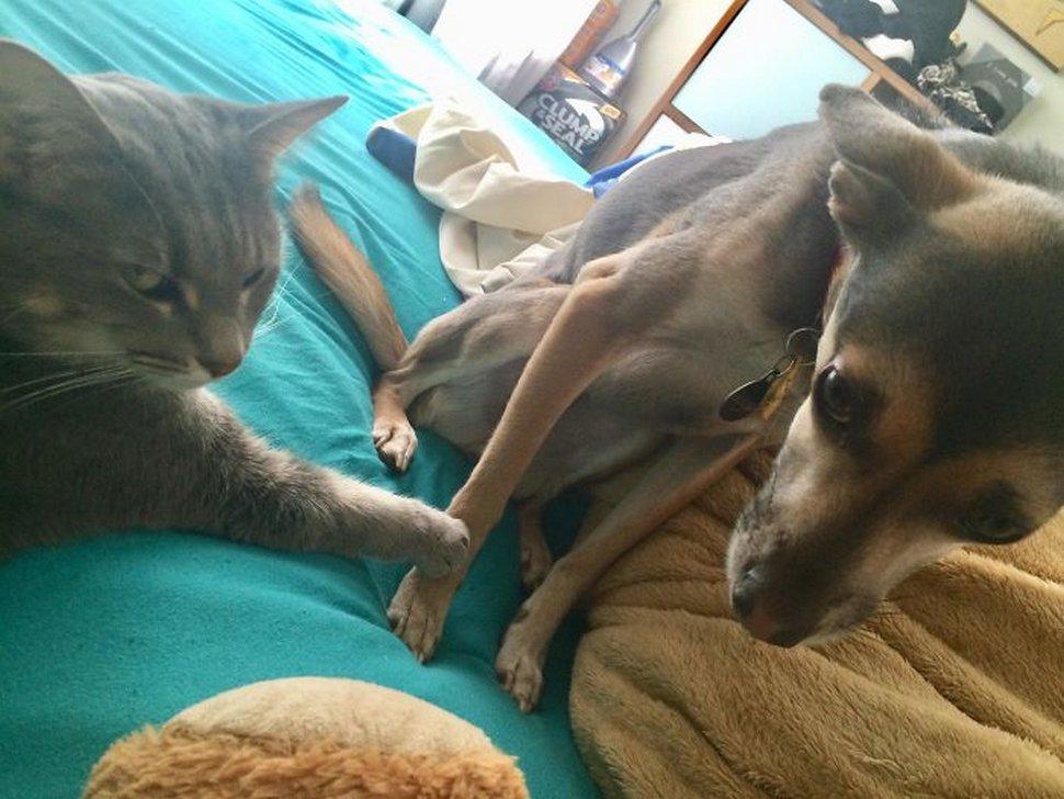 #11 | 12 фотографий, доказывающих, что коты — суперзлодеи в мире домашних животных | Zestradar