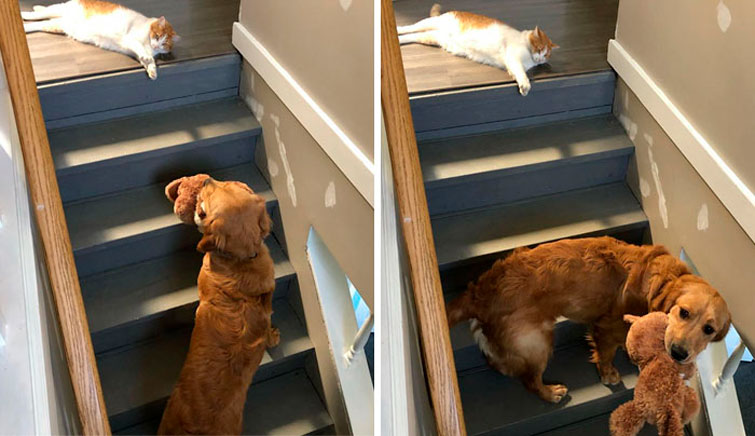 #12 | 12 фотографий, доказывающих, что коты — суперзлодеи в мире домашних животных | Zestradar