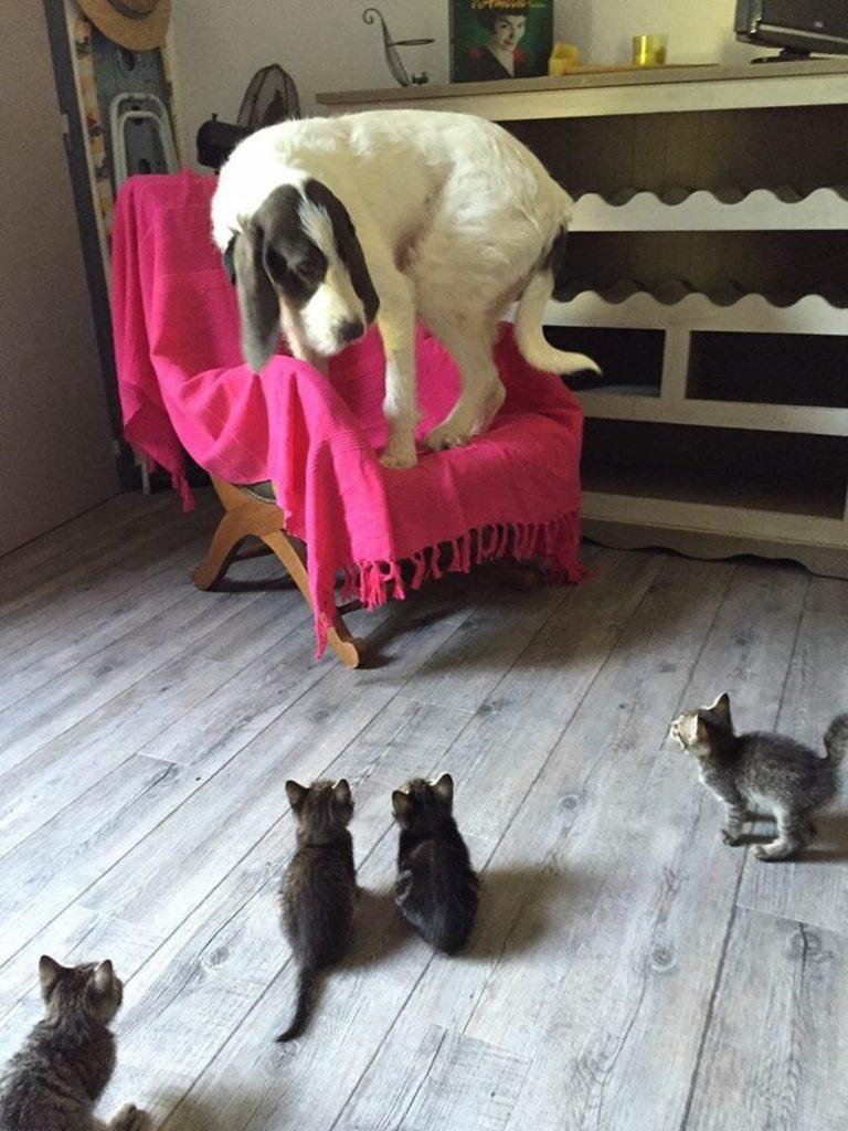 #3 | 12 фотографий, доказывающих, что коты — суперзлодеи в мире домашних животных | Zestradar