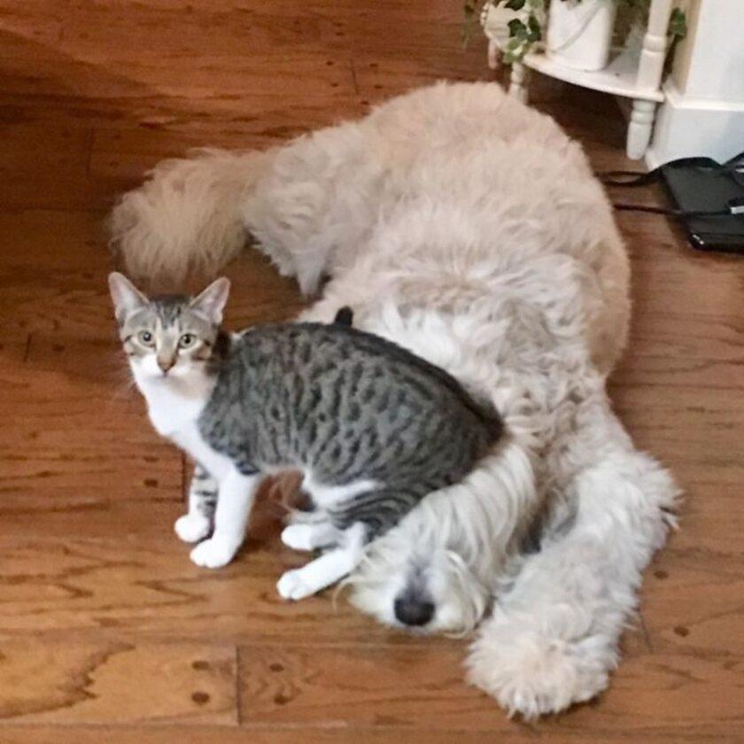 #4 | 12 фотографий, доказывающих, что коты — суперзлодеи в мире домашних животных | Zestradar