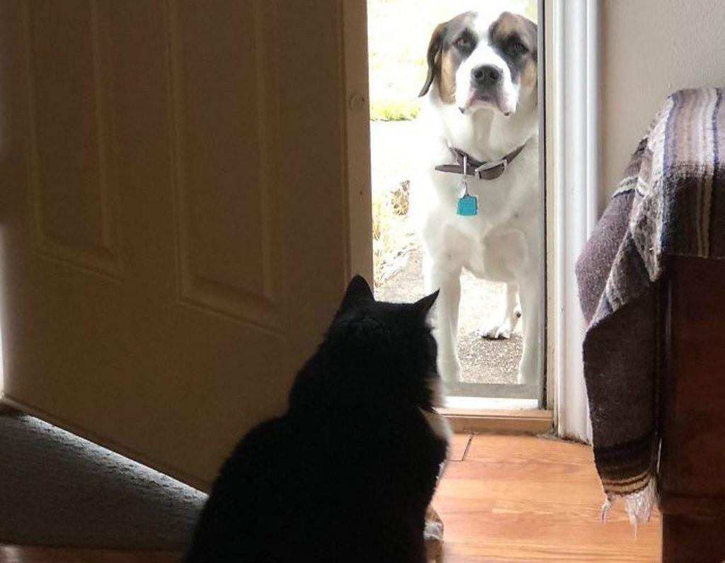 #6 | 12 фотографий, доказывающих, что коты — суперзлодеи в мире домашних животных | Zestradar