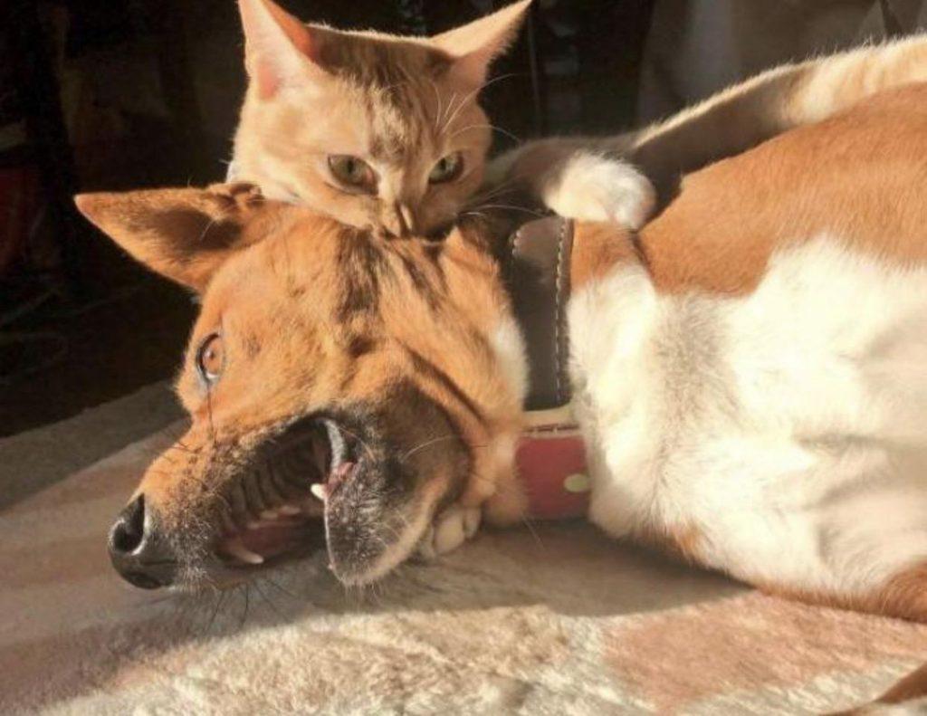 #7 | 12 фотографий, доказывающих, что коты — суперзлодеи в мире домашних животных | Zestradar