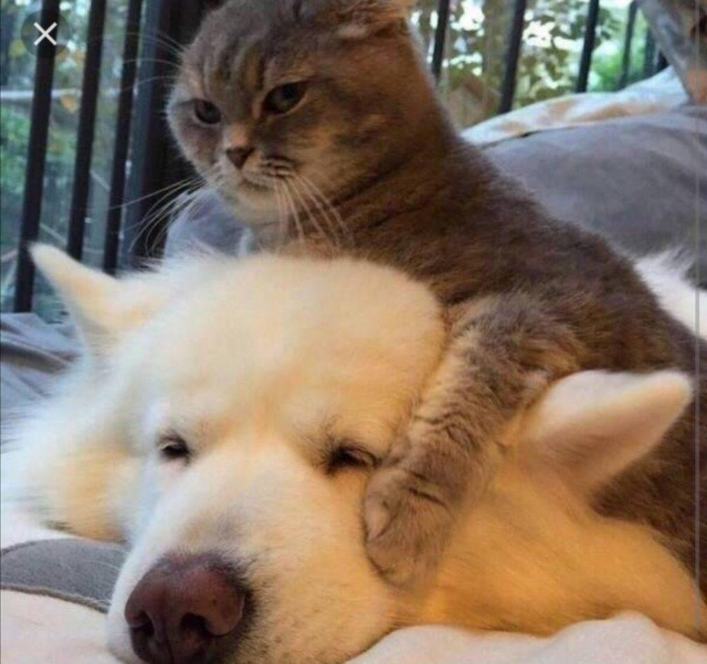 #9 | 12 фотографий, доказывающих, что коты — суперзлодеи в мире домашних животных | Zestradar