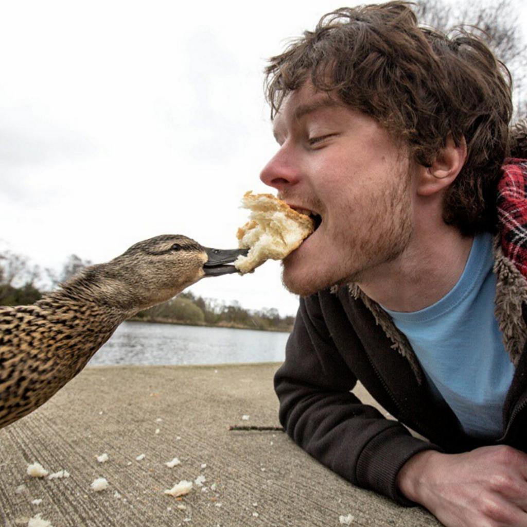 #15 | Аллан Диксон и его невероятные селфи с дикими животными | Zestradar