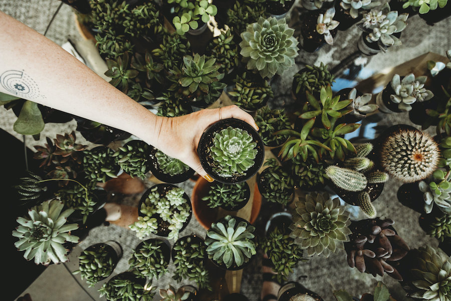 Get Some Greenery | Free Self-Care Things To Do When Money Is Tight | Zestradar