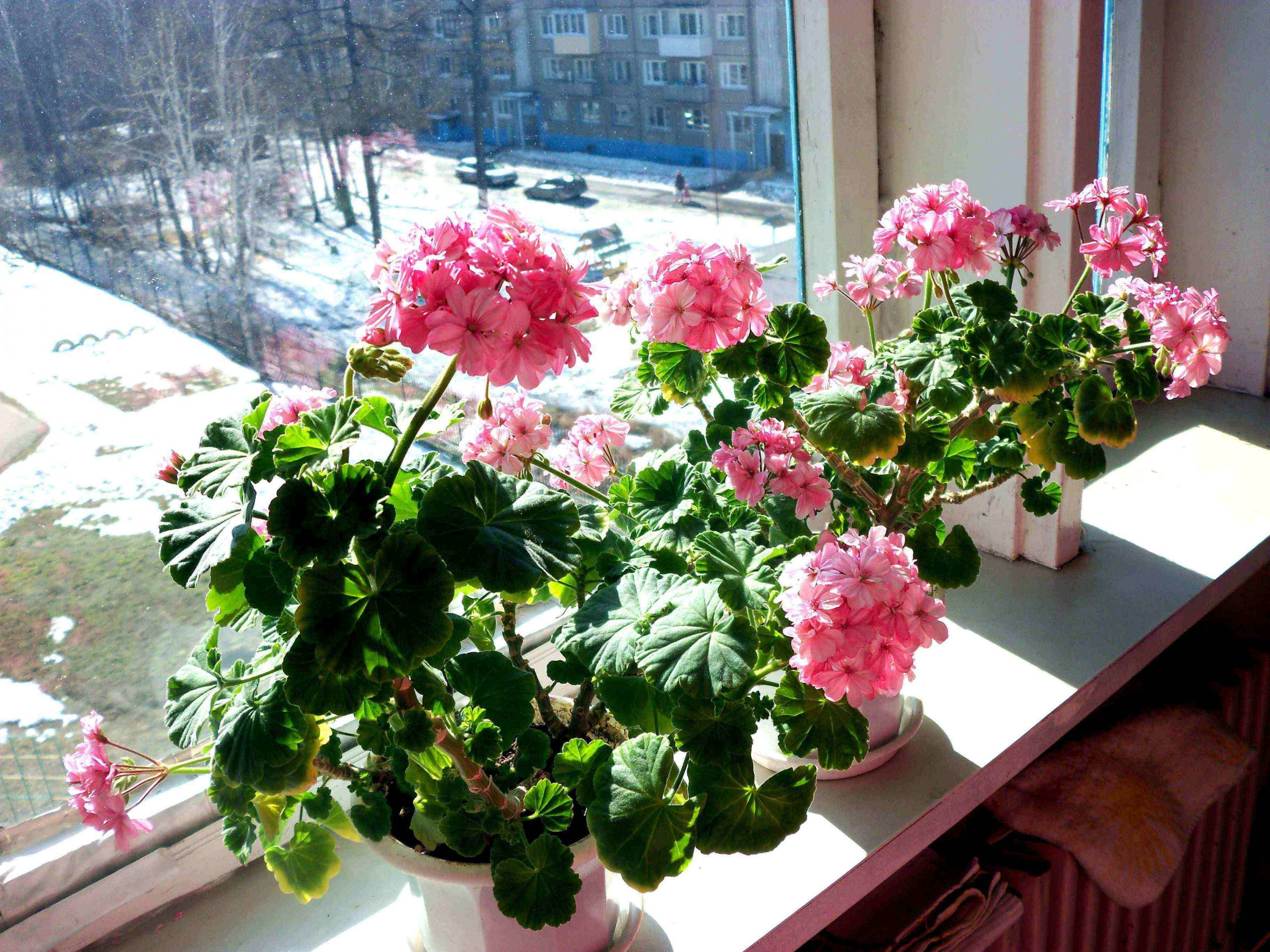 Комнатные растения, которые заменят домашнюю аптеку | Zestradar