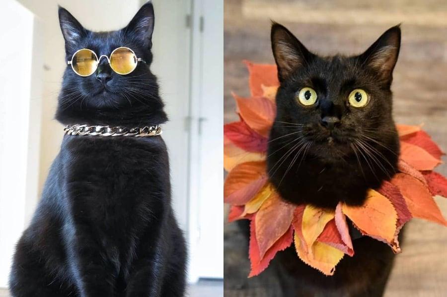 #1   Rover The Cat Puts Models To Shame   Zestradar