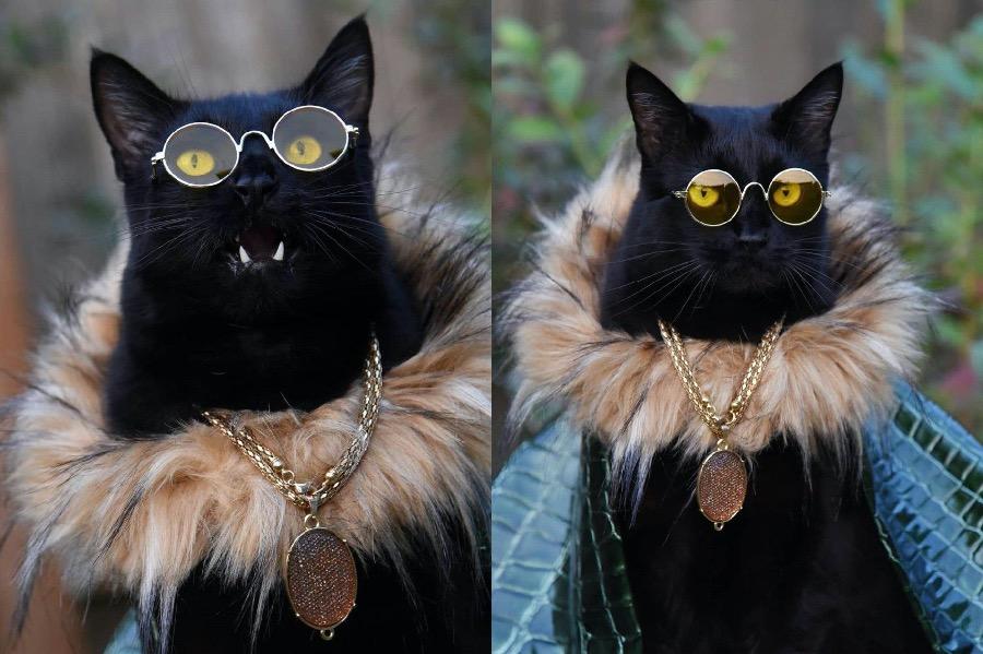 #10   Rover The Cat Puts Models To Shame   Zestradar