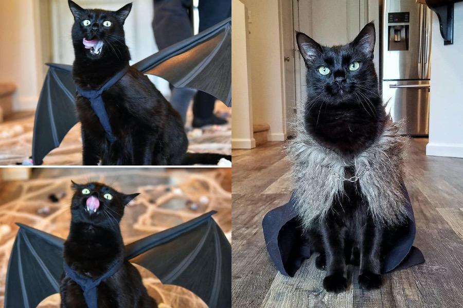 #2 | Rover The Cat Puts Models To Shame | Zestradar