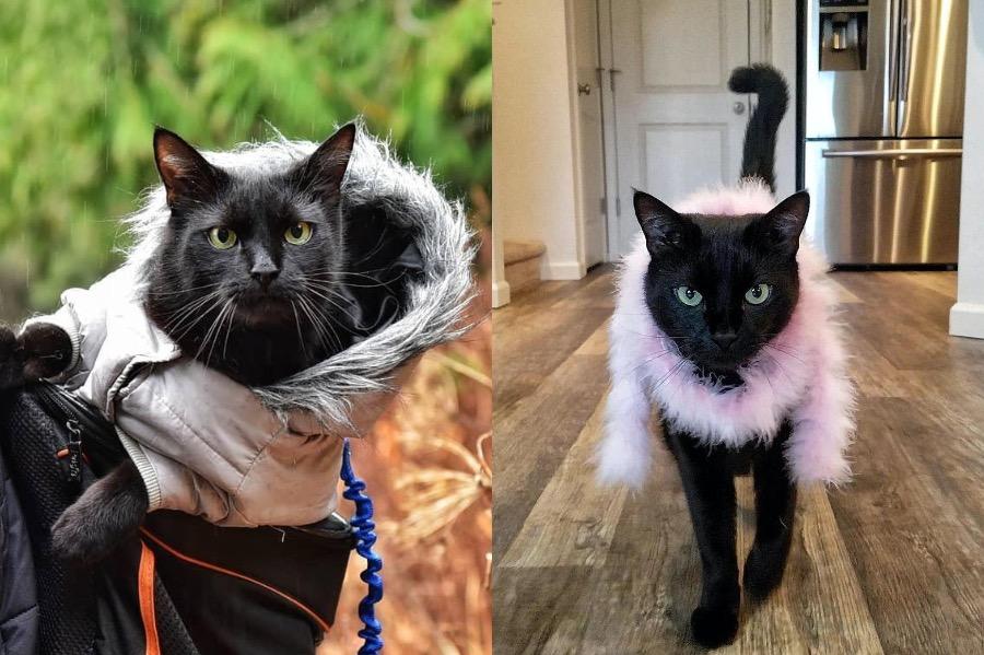 #3   Rover The Cat Puts Models To Shame   Zestradar