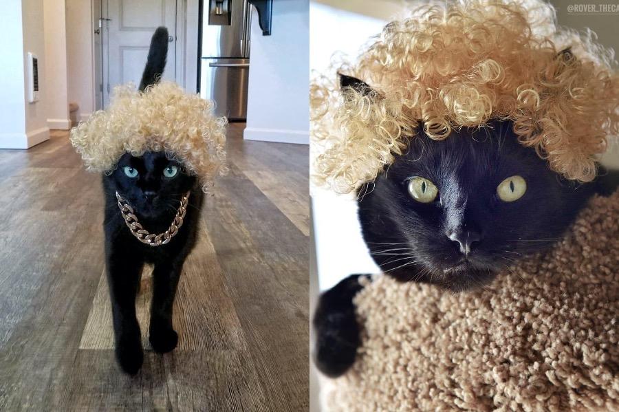 #5 | Rover The Cat Puts Models To Shame | Zestradar