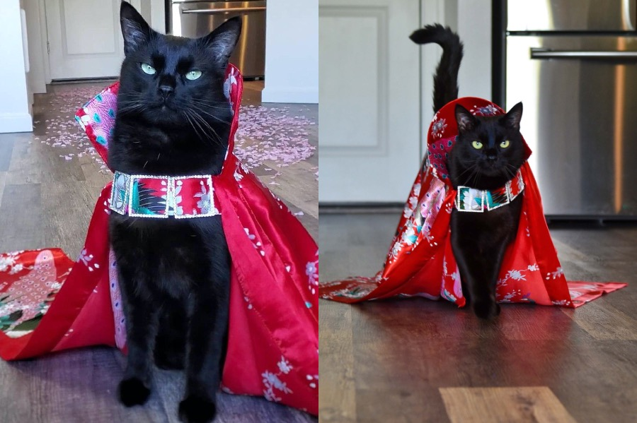 #6   Rover The Cat Puts Models To Shame   Zestradar