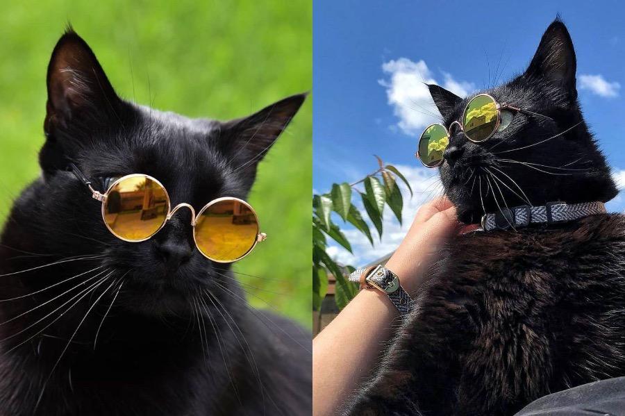 #7 | Rover The Cat Puts Models To Shame | Zestradar