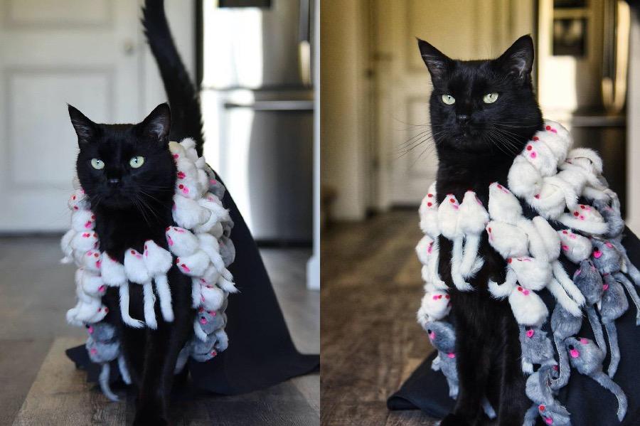 #8 | Rover The Cat Puts Models To Shame | Zestradar