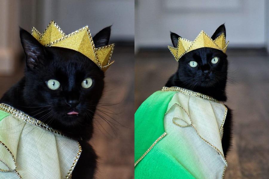 #9 | Rover The Cat Puts Models To Shame | Zestradar