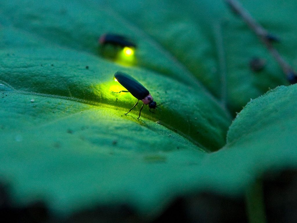 10 Spectacular Glow-in-the-Dark Animals | Brain Berries