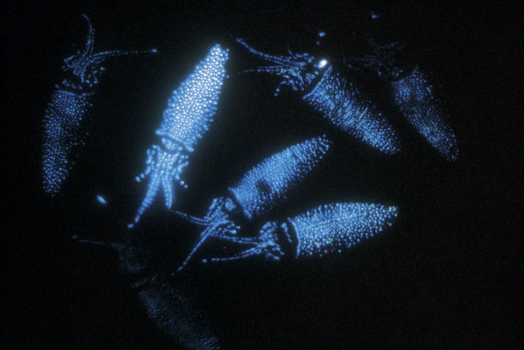 10 Spectacular Glow-in-the-Dark Animals #9 | Brain Berries