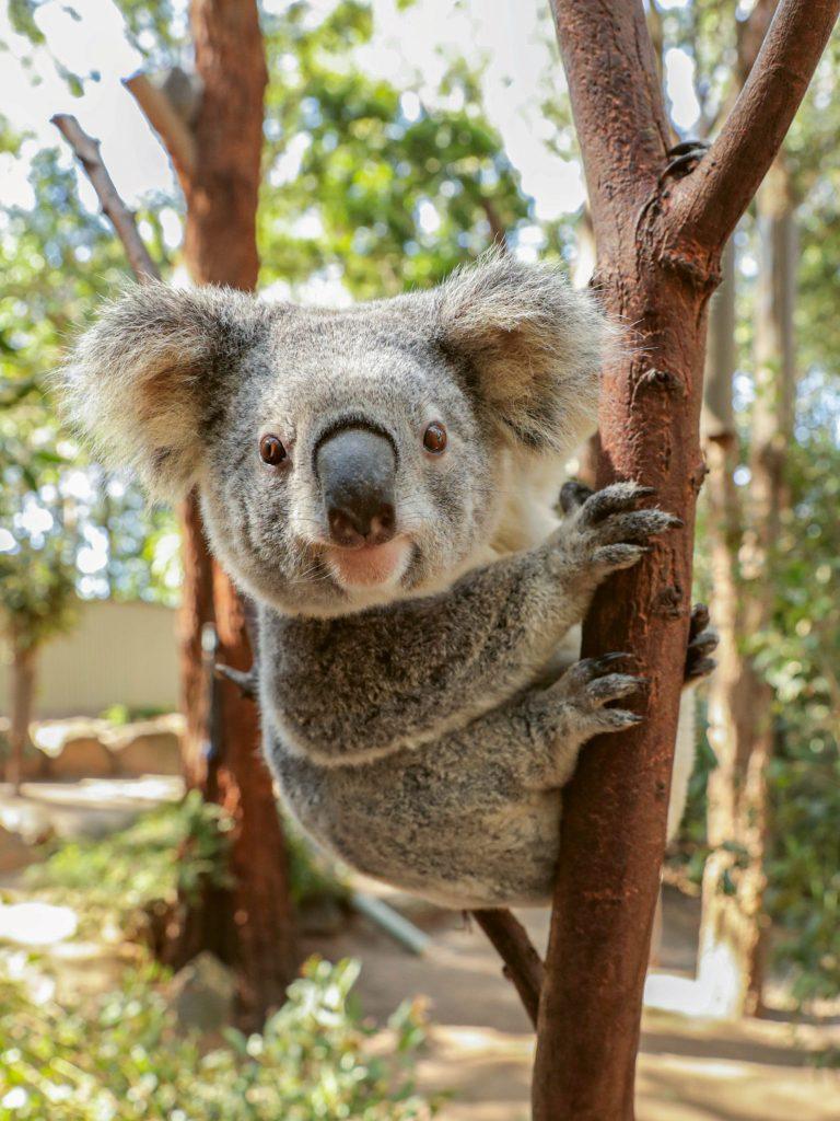 #13 | Календарь австралийских пожарных: то,  что нужно в 2020 | Zestradar