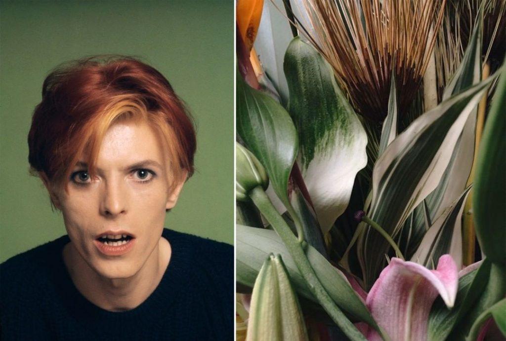 #1 | David Bowie As Flowers | Zestradar
