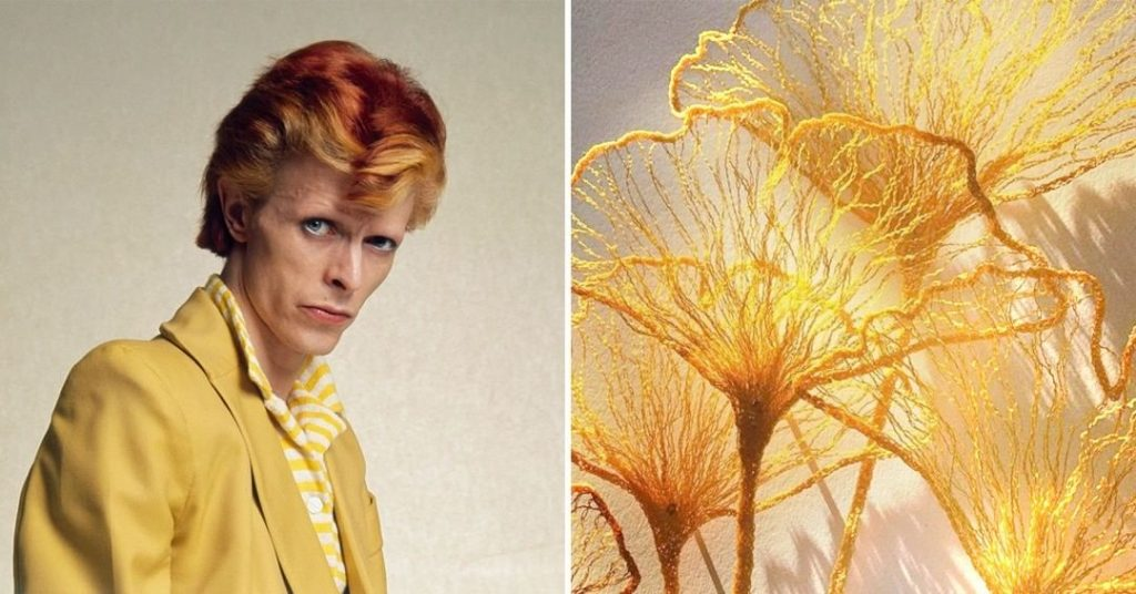 #10 | David Bowie As Flowers | Zestradar